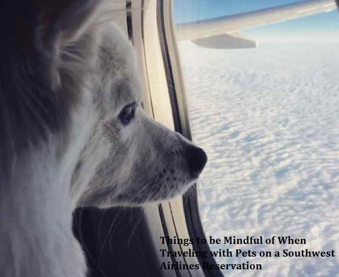 Traveling with Pets on a Southwest Airlines Reservation